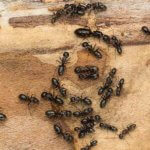 Pest Control Company Frederick CO