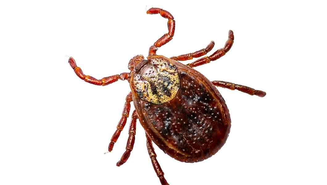 Westminster Pest Control Near Me