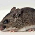 Mouse Exterminator Denver