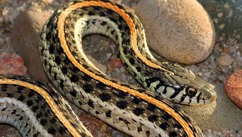 Colorado's Best Snake Removal Experts