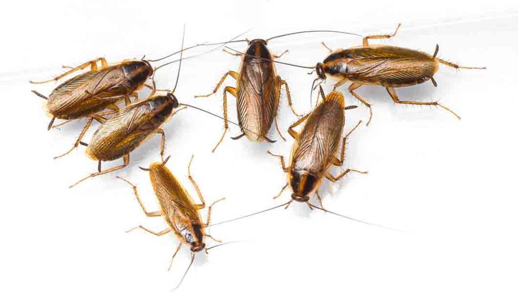 Best Boulder Pest Control