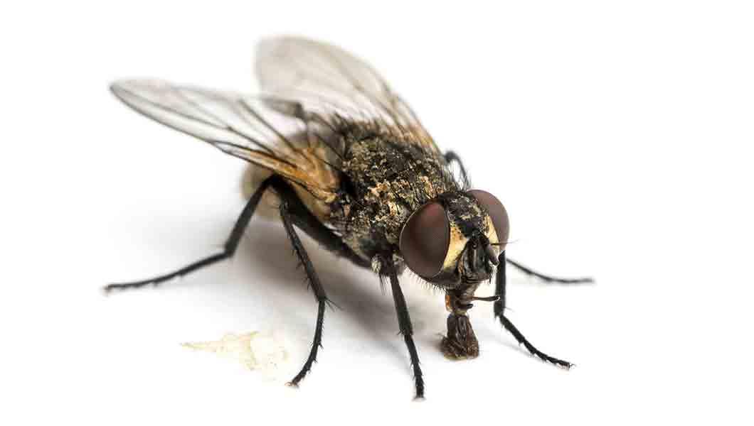 Northern Colorado emergency pest control