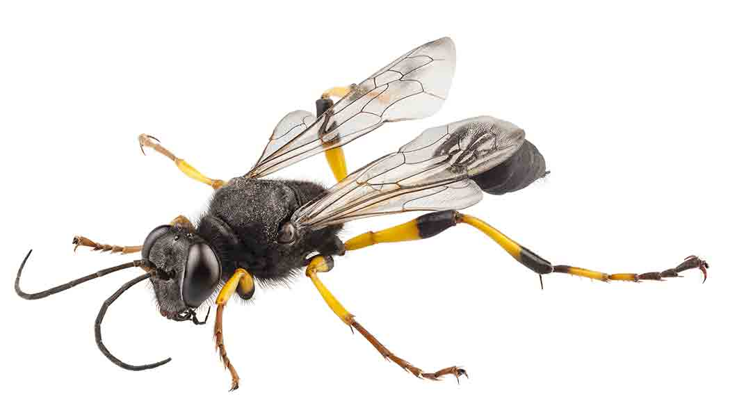 NOCO PEst and Wildlife Control wasps
