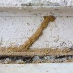 termite damage termites
