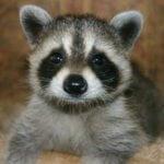Baby Animal Season in Colorado - Northern Colorado Pest and Wildlife Control