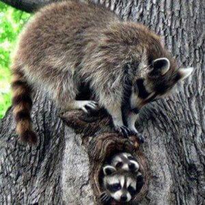 Humane Baby Animal Removal - Baby Animal Season in Colorado